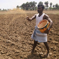 Sowing seed in India