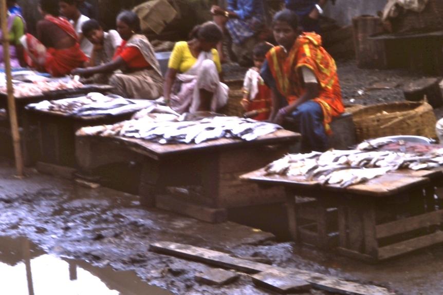 Selling Fish