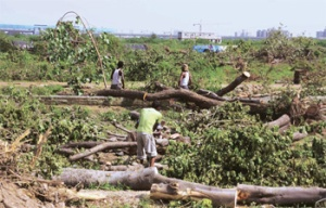 tree-chopping